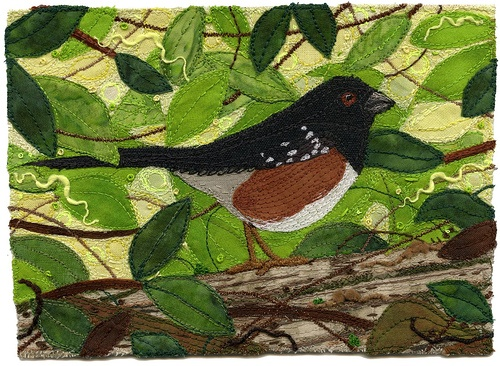 Spotted-towhee-Chursinoff
