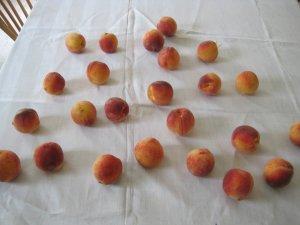 peaches_artistic