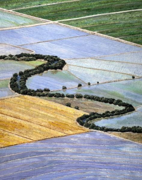 California Ricelands Merle Axelrad