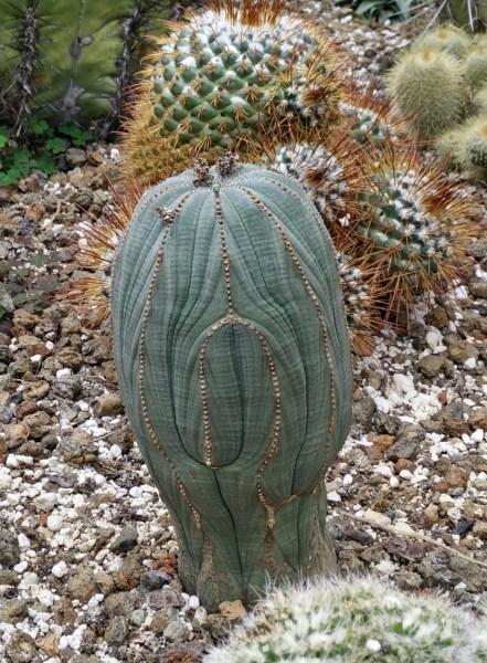 Cactus Stan Hywet
