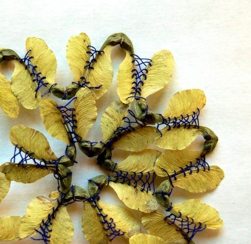 Hillary Fayle seed pods