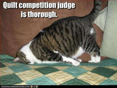 funny-cat-pictures-quilt-competition-judgeis-thorough