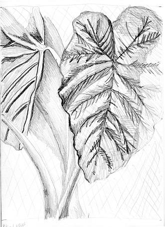 JAN JMM Sketch 3
