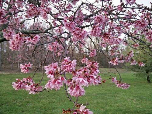 SpringBlossomJAM
